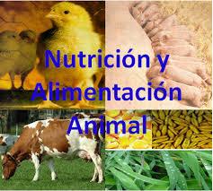 Se dictan normas para aplicar en España la normativa europea sobre alimentación de animales de producción con piensos animales
