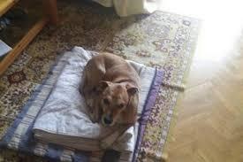 El Colegio de Abogados de Barcelona condena que se haya sacrificado al perro de la enfermera con ébola