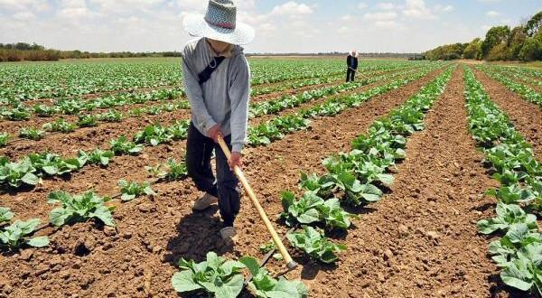 Si se concede una subvención para una actividad agrícola y no se ejerce dicha actividad, hay que devolverla