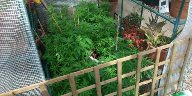 Cultivo de sustancias que causan grave daño a la salud