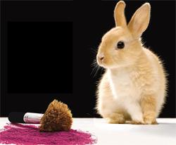 La prohibición de productos cosméticos testados en animales incluye a los realizados fuera de la UE
