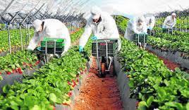 Se prorroga para 2017 la vigencia de la gestión colectiva de contrataciones en origen de trabajadores para campañas agrícolas de temporada