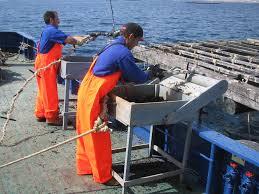 Se establecen para 2017 las bases de cotización a la Seguridad Social de los trabajadores del Régimen Especial del Mar