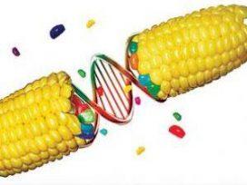 Se modifica el Reglamento de comercialización de organismos modificados genéticamente