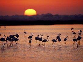 La Comisión lleva a España ante el Tribunal por la desprotección del humedal de Doñana