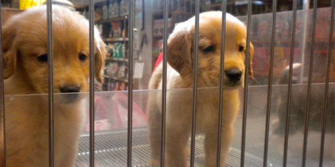 El ICAM se sitúa a la vanguardia jurídica en la protección de los animales