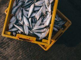 El Ministro de Agricultura, Pesca y Alimentación muestra su aprobación del nuevo Acuerdo de Pesca en la Eurocámara