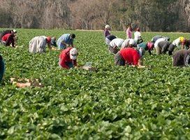 Se amplía hasta el 14 de febrero el plazo de ingreso de las cuotas por inactividad de los meses de enero a abril de 2019 para los trabajadores agrarios por cuenta ajena
