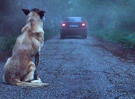 Un Juzgado de lo Penal impone una multa de 720 euros por abandono de animales