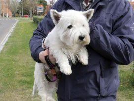 Un juzgado de Murcia rechaza la demanda de copropiedad de un perro