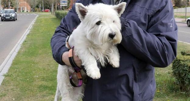 6 meses de cárcel por dejar morir a su perro tras abandonarlo sin alimento ni agua