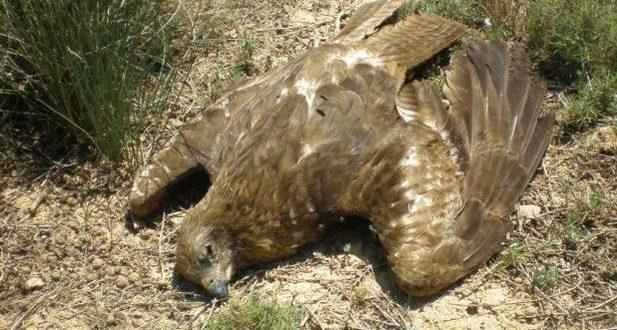 Tres personas a prisión por envenenar masivamente a aves en Navarra