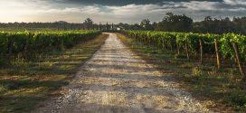 Castilla la Mancha: Modificación a la Orden 202/2018, de 28 de diciembre, por la que se regula el potencial de producción vitícola