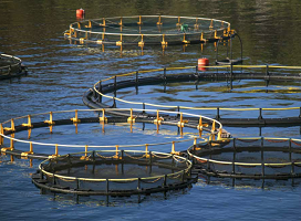 Se publica el V Convenio colectivo para la acuicultura marina nacional