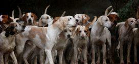 Un Juzgado de Valencia archiva una causa sobre un vídeo publicado de una rehala de perros