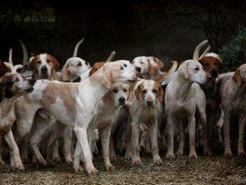 Un Juzgado de Valencia archiva una causa sobre un video publicado de una rehala de perros
