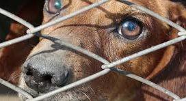 Condenado a un año de carcel el propietario de una perra por maltratarla y dejarla al borde de la muerte